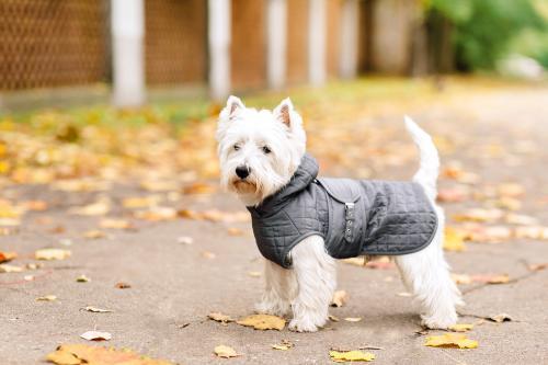 5 consejos para vestir a tu mascota en invierno y protegerla del frío