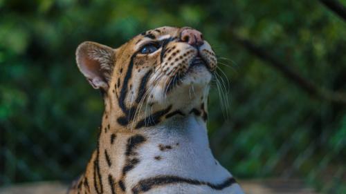 7 animales peruanos en peligro de extinción y cómo podemos ayudarlos
