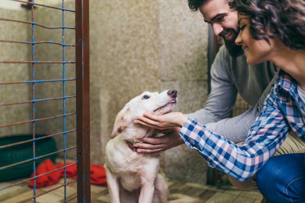 Adopción de perros en Lima