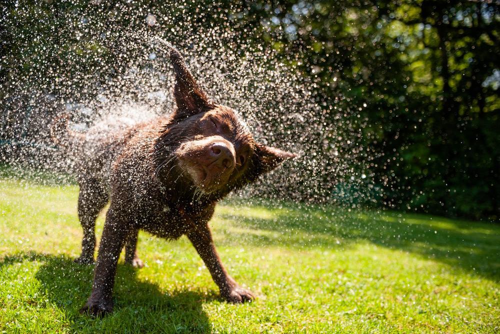 bañar a tu perro secarlo