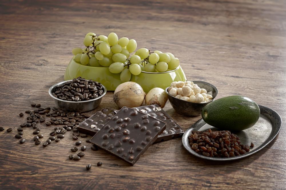 Chocolate y otros alimentos prohibidos para perros