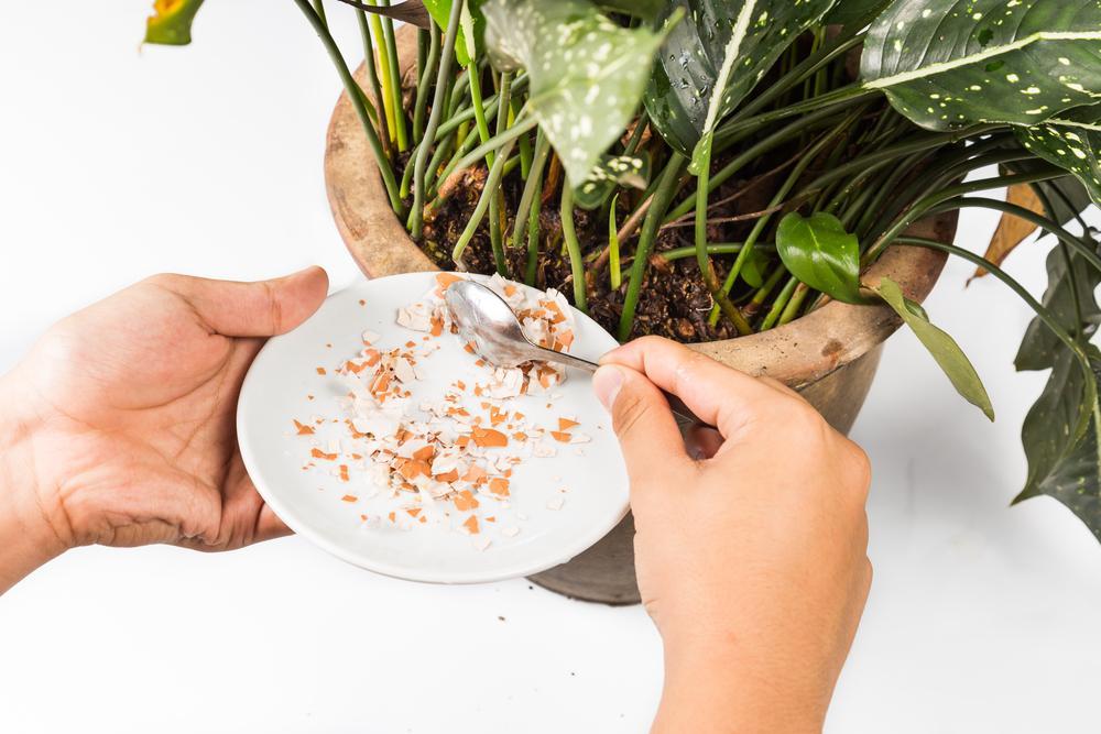 5 formas de hacer abono orgánico casero para plantas