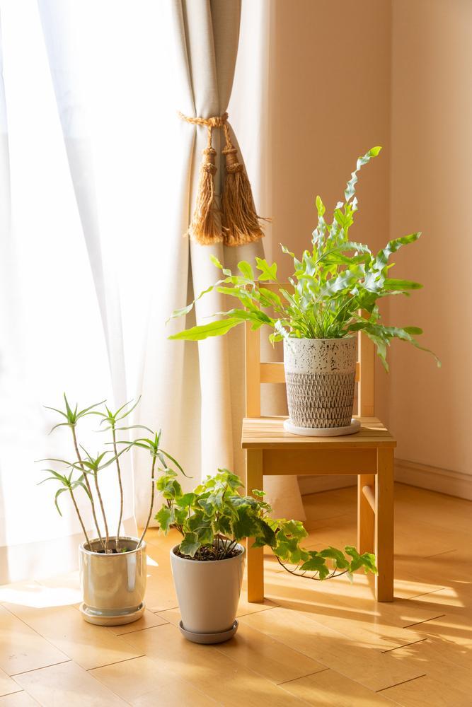 7 consejos para cuidar las plantas en invierno