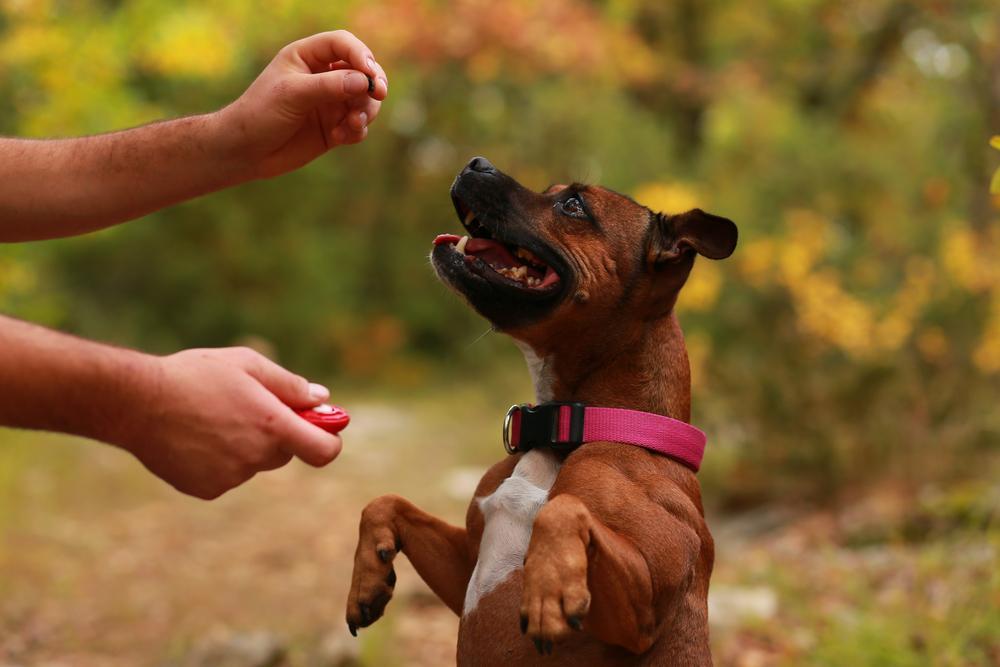 6 consejos para educar a tu perro