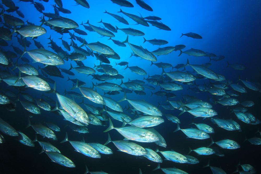 7 datos curiosos que no sabías del atún