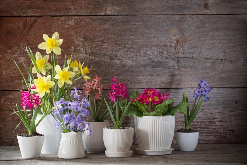 flores plantas en casa