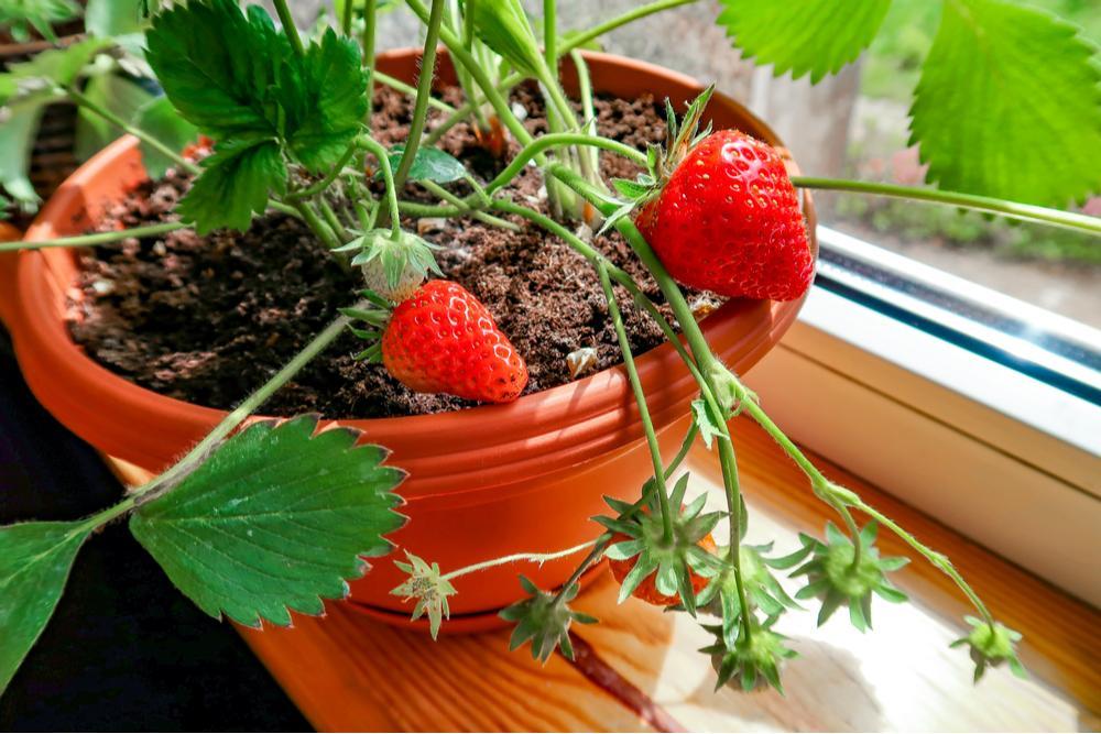 Huerto en casa: 7 frutas y verduras fáciles de plantar y que crecen rápido