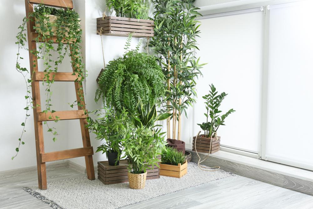 helecho plantas en casa