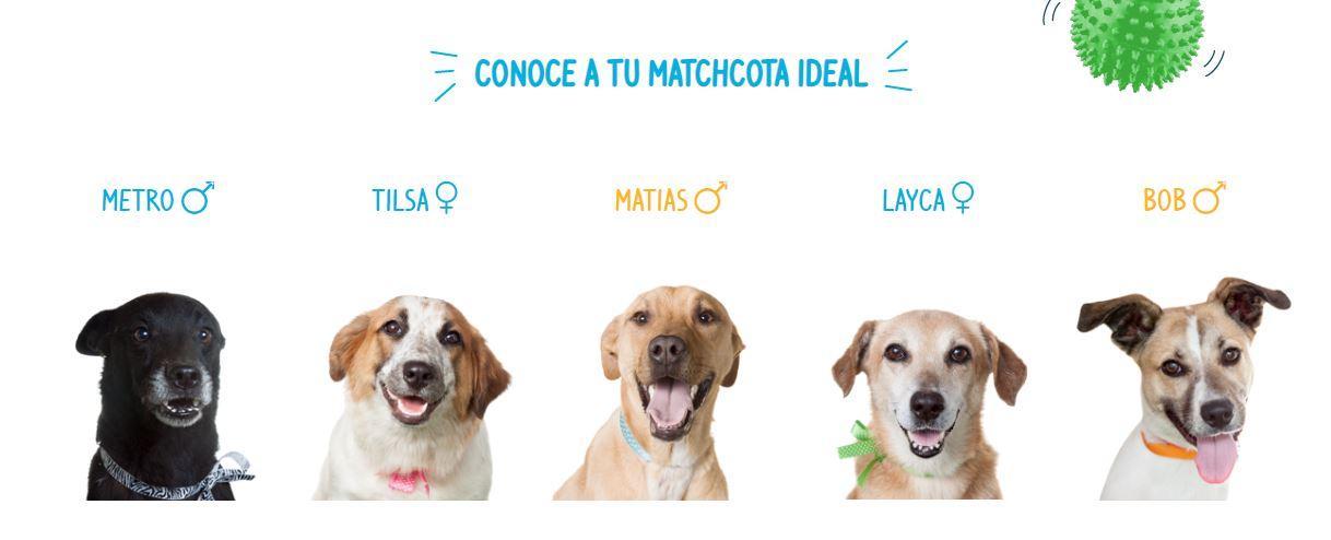 Matchcota adopción de perros en Lima