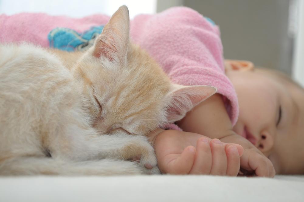 qué hacer con mi mascota ante la llegada de un bebé