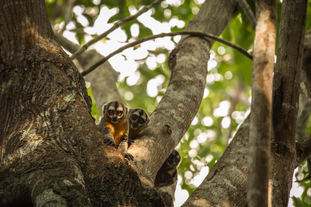reserva pacaya samiria turismo en la selva