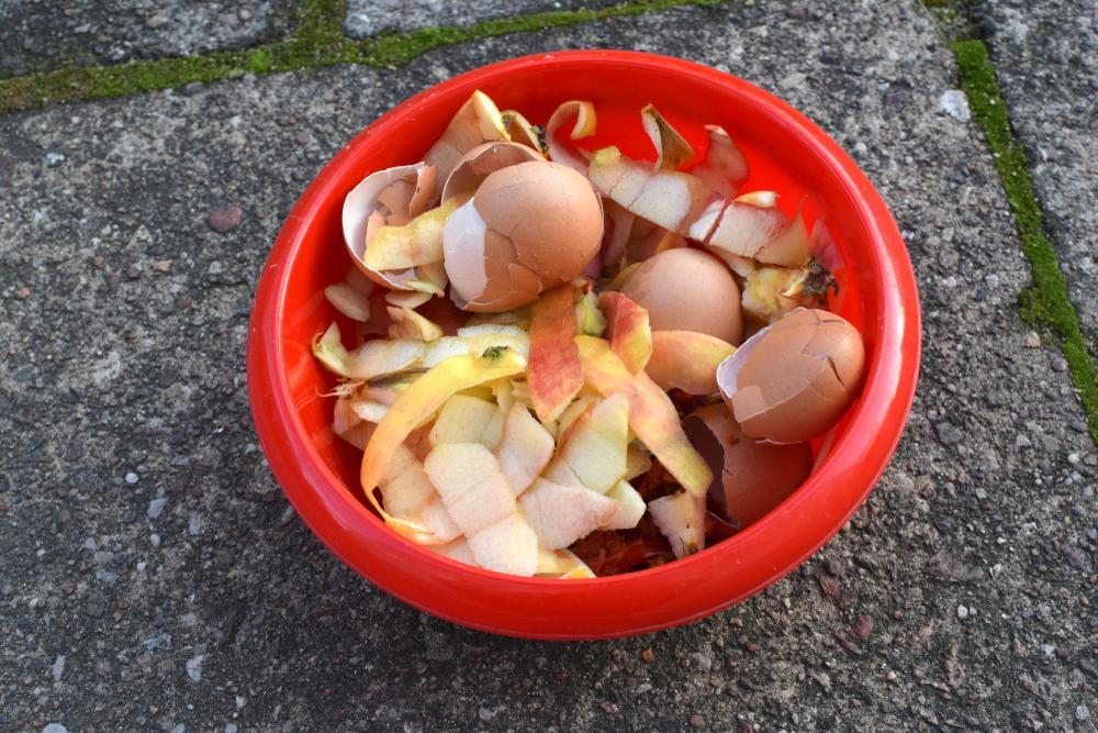 compost para sembrar en casa durante la cuarentena