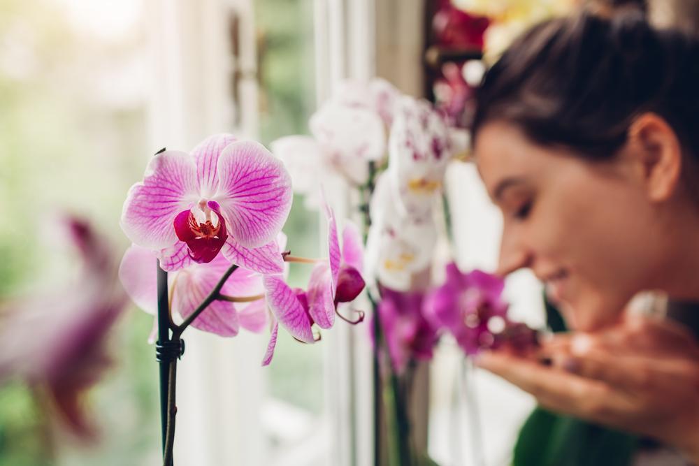 Orquideas plantas purificadoras