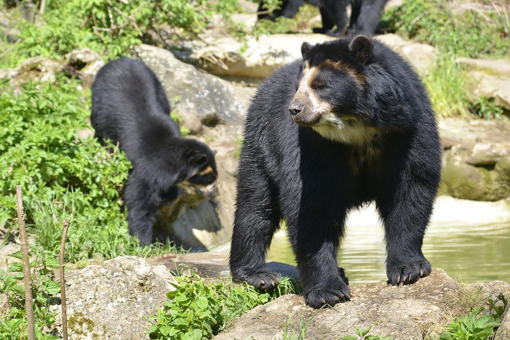 animales peruanos en extinción