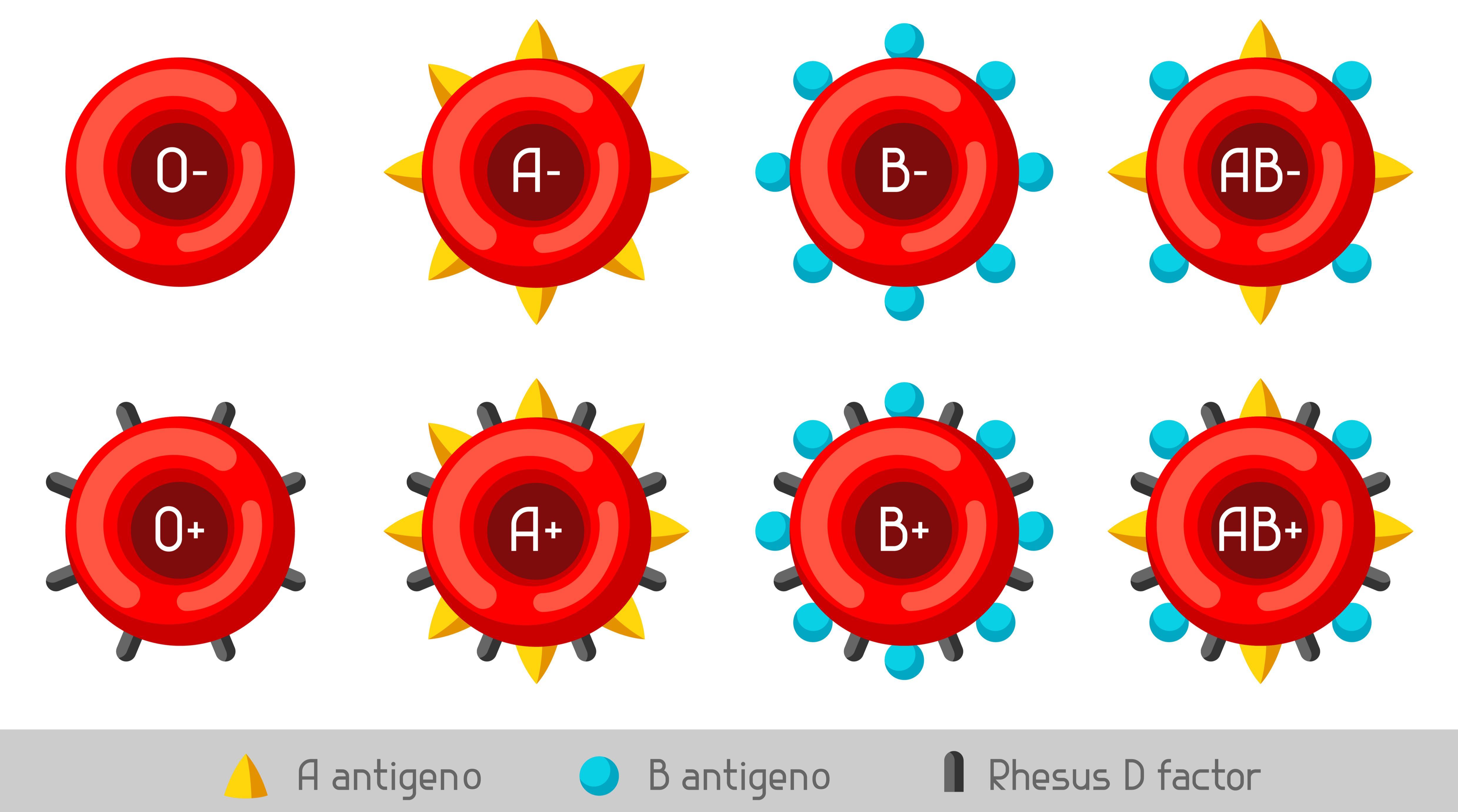 cómo explicar los grupos sanguíneos a los niños