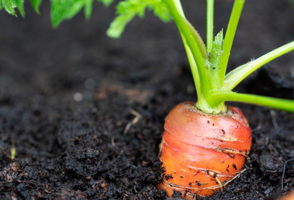 Mini huerto: 5 alimentos que puedes sembrar en casa y cómo hacerlo
