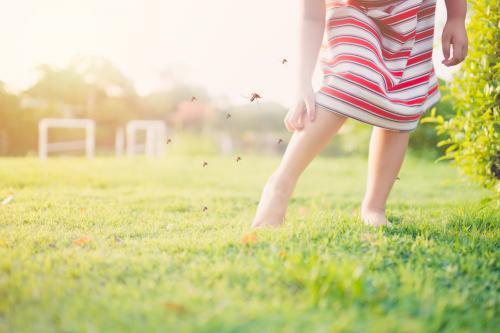 Cómo eliminar zancudos en verano: 8 trucos que sí funcionan
