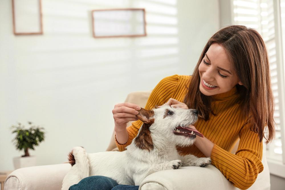 Cómo evitar el estrés en nuestras mascotas durante el encierro
