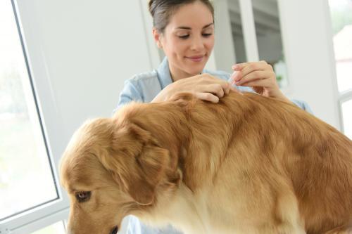 Cómo cuidar a tu perro de las garrapatas con la llegada del calor