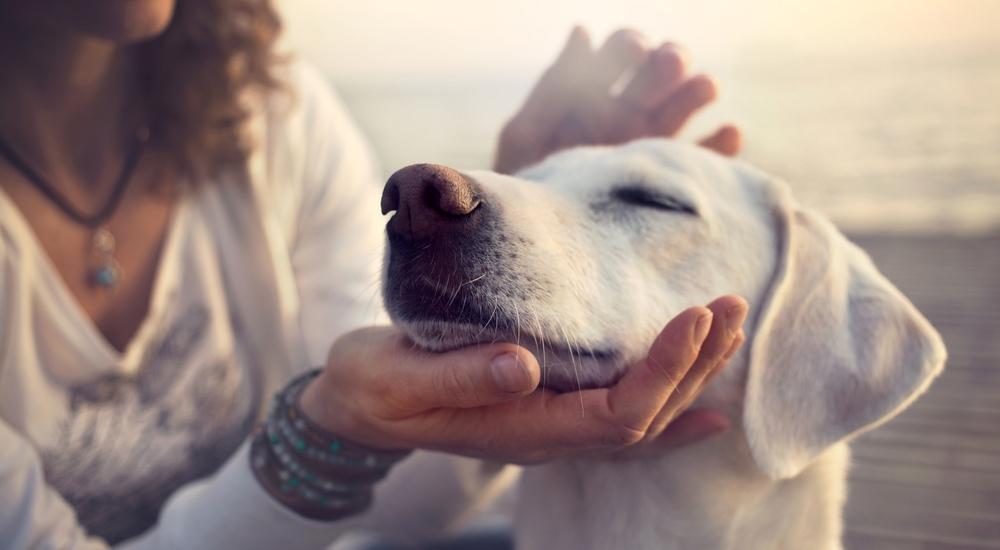 4 lugares de Lima para jugar con tu perro por horas