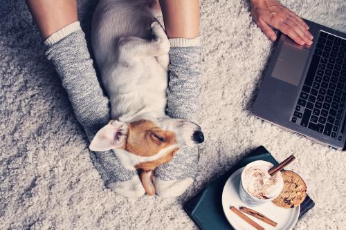 5 consejos para cuidar y entretener a tu mascota cuando no puede salir de casa