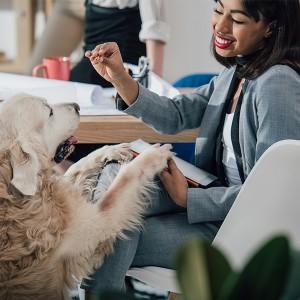 ¿Perritos en la oficina? Descubre todos sus beneficios