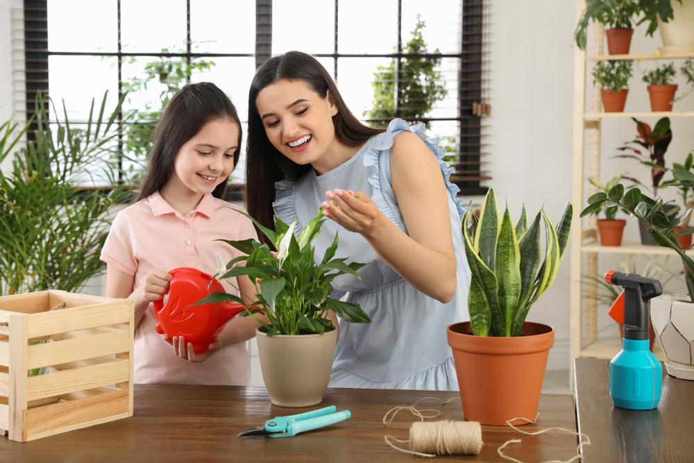 Qué plantas son ideales para tener en el interior de la casa