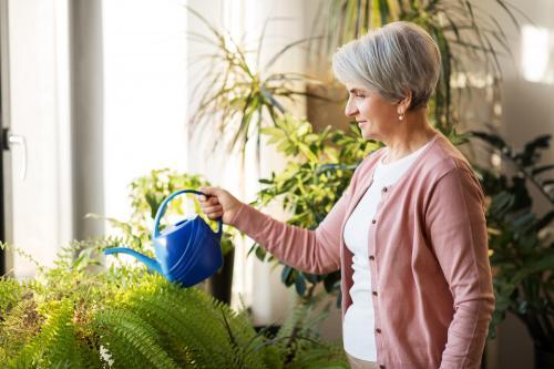 ¿Sabías que hay plantas que limpian el aire de tu hogar?