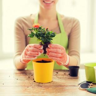 Las ventajas de tener plantas en casa