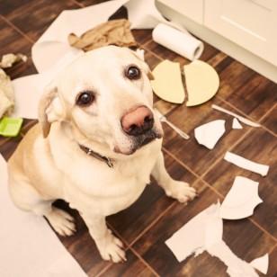 7 mascotas ideales para quienes viven en un departamento