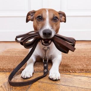 ¿Y si sales a correr con tu perro?