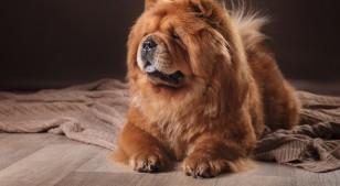 Cinco tips para tener una casa libre de pelos de mascota