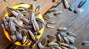 ¿Sirven las bolsas de semillas terapéuticas?