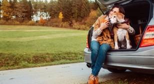 Algunas razones por las que tu perro necesita pasear seguido