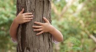 7 razones para proteger a los árboles (y plantar muchos más)