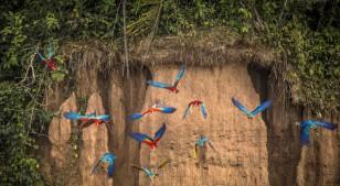 Conoce la Reserva Nacional de Tambopata