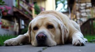 Los animales pueden sufrir de problemas mentales como nosotros