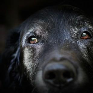 3 formas muy sencillas de sumar años a la vida de tu perro