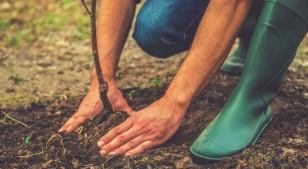 4 beneficios para la salud de vivir rodeado de árboles