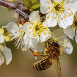 Abejeando: ¡descubre las maravillas del polen!