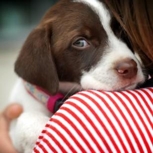 ¿Sabías que tu perro te mantiene saludable?