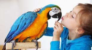 Los riesgos de tener animales exóticos como mascotas