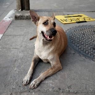 Aprende a proteger a tu mascota en caso de emergencias y evacuaciones