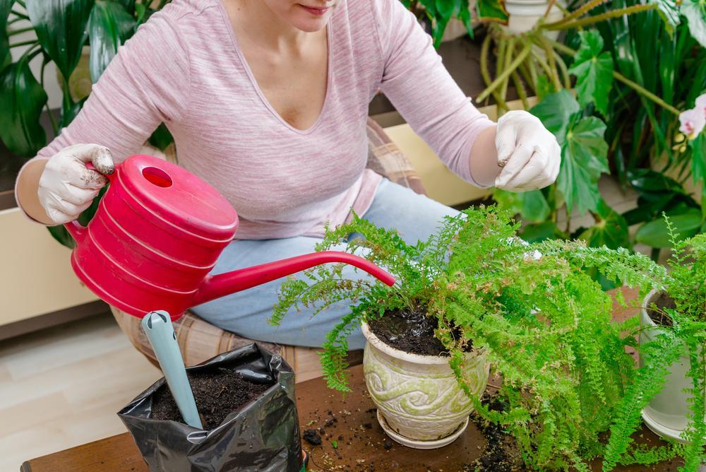 6 frutas y verduras que puedo cultivar en mi casa o departamento